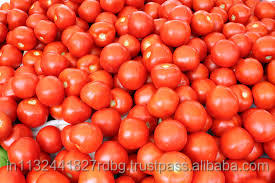 fresh tomato exporters in india/red tomato supplier