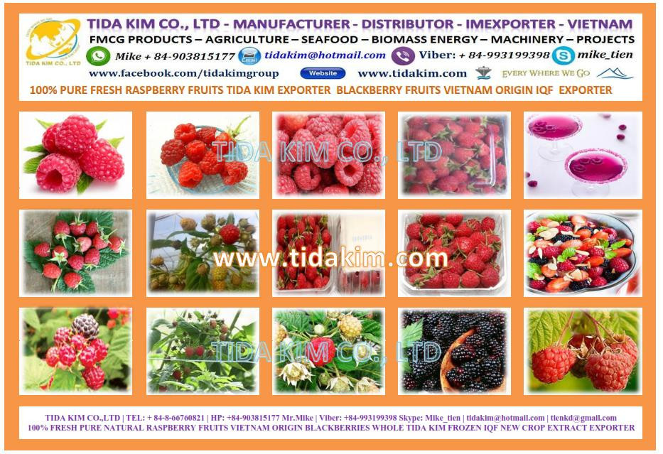 FRESH MULBERRY FRUITS NATURAL 100% PURE VIETNAM FROZEN DRIED - TIDA KIM ORIGIN - IQF USED PRODUCTION