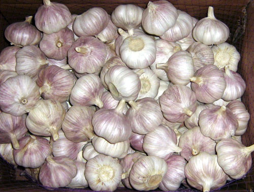 Fresh Normal White And Pure White Garlic