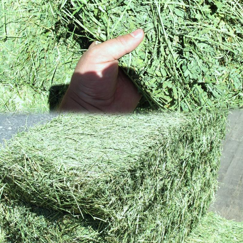 Alfalfa Hay Bales for sale