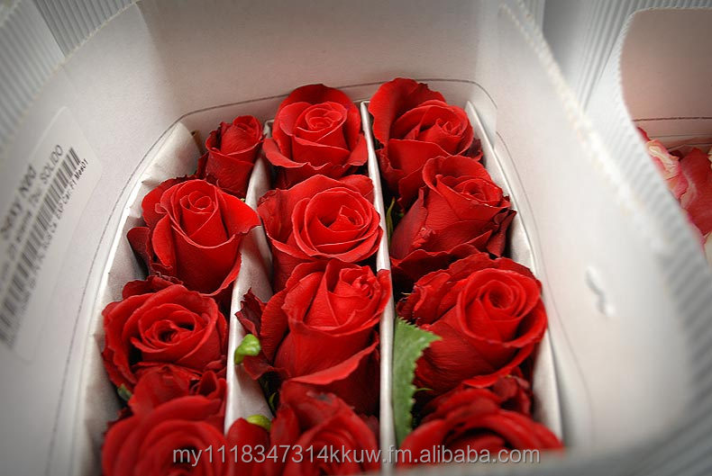 Fino Ecuador Fresh Cut Flowers/ Roses