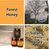 TROPICAL FOREST HONEY