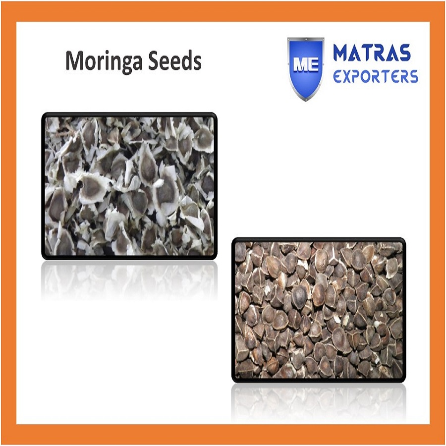 PKM1 Moringa Oleifera Seeds for Oil Making