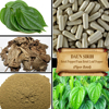 [ORGANIC] BETEL LEAF / PAAN / BETEL PEPPER / Piper Betle / Fresh Powder, Extract, Capsules, Liquid, Oil