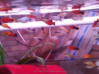 Freshwater, Live Marine Fish, Corals, and Tropical Aquarium Fishes for Sale