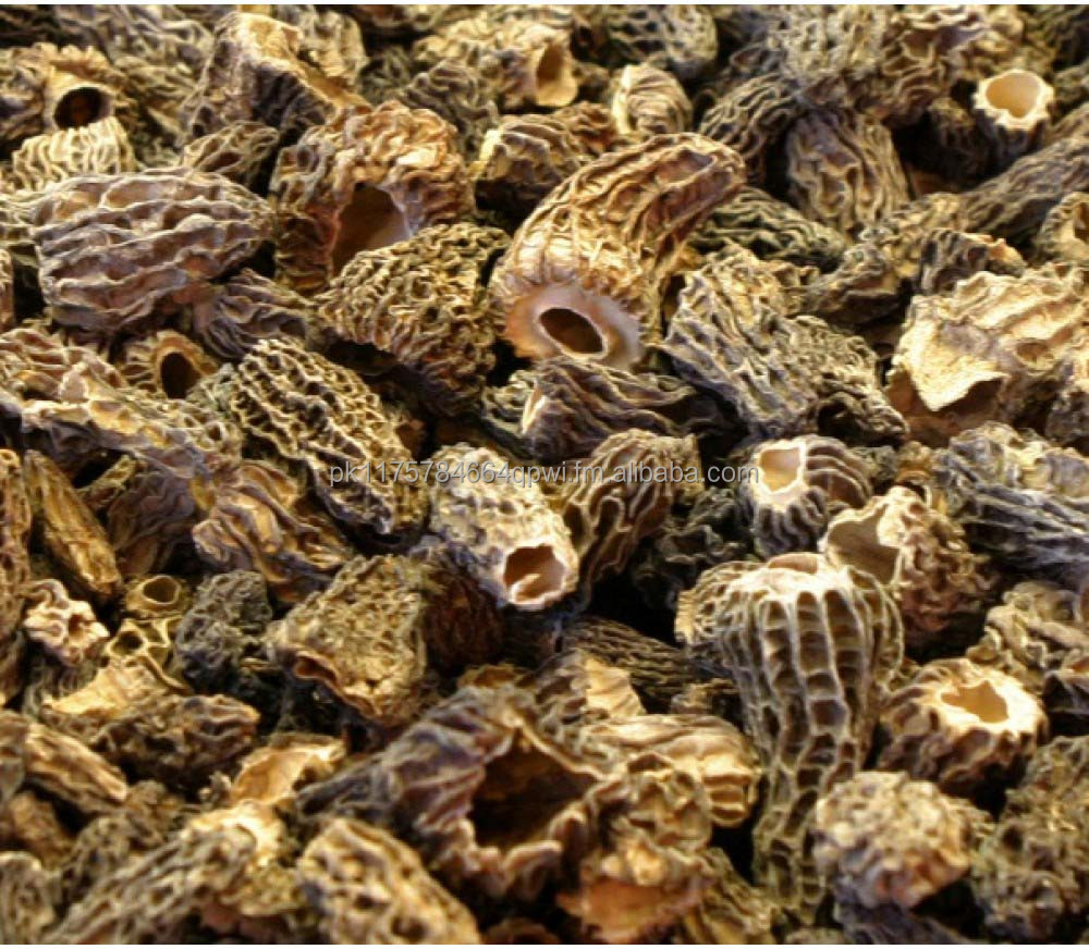 Dried Morchella Conica | Dried Morel Mushrooms