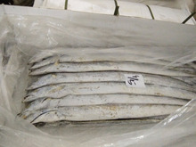 Loligo Squid fish,3 spot crab,Frozen Ribbon Fish,Grade A & B Ribbon fish, Grade A Ribbon Fish,Ribbon fish, Seafood