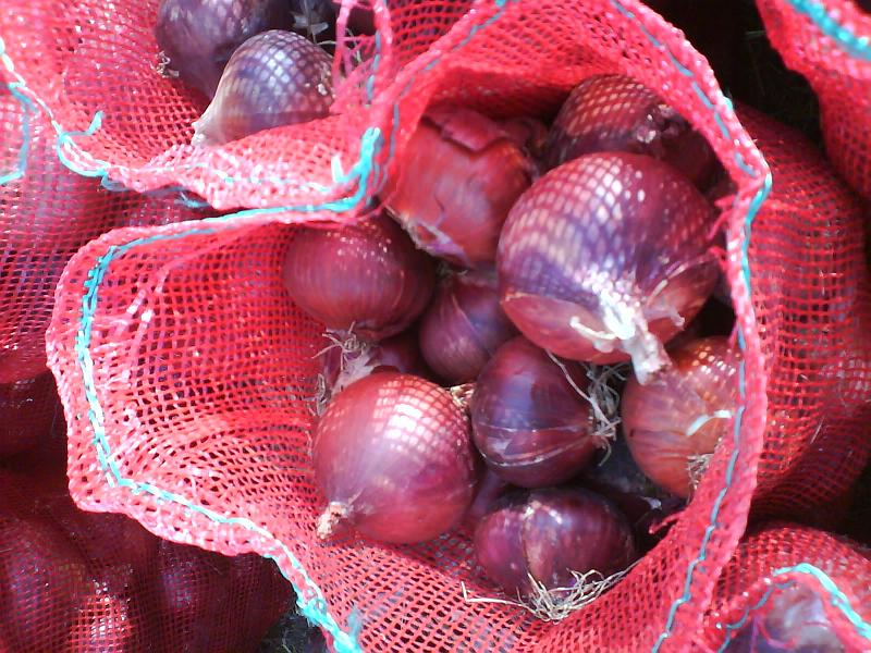 egyptian fresh red&yellow onion high quality A