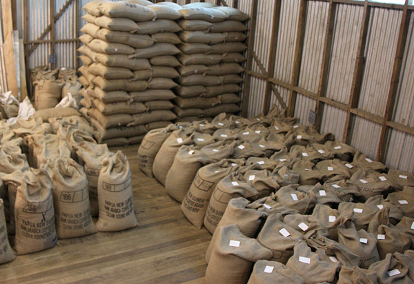 supplier arabica green coffee beans for sale FROM INDONESIA BEST