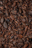 Roasted Cocoa