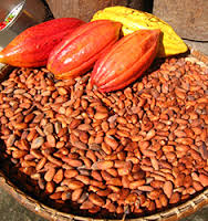 cheap Dried raw Cocoa Beans for sale