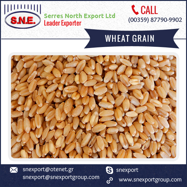 2016 New Product Soft Wheat Grain Used for Wheat Flour