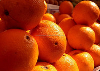 Grade A Fresh Oranges (Navel, Valencia etc)
