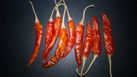 3~6+ cm Dreid Red Chilli Pepper with stem