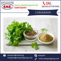 High Quality Coriander Seed Powder available in Bulk for Buyers