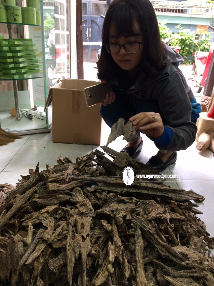Good price offer for big demands of Oud wood chips nice wild pieces with supreme fragrance -Vietnam agarwood price