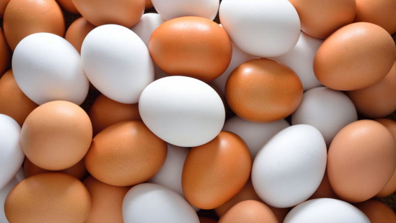 FRESH CHICKEN EGGS WHITE / BROWN FOR SALE