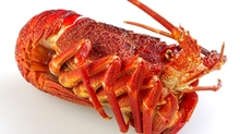 Live Californian Red Spiny Lobsters/American Lobster tail/Factory Wholesale Californian Red Spiny Lobsters
