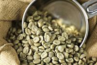 VIETNAM ROBUSTA COFFEE S16 GRADE 1 (Mobile: 0084965152844)