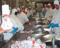 Frozen Chicken Upper & Lower Backs !!! Gold Supplier !!!