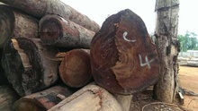 Keruing wood logs, solid Keruing sawn timber, Keruing hardwood lumber for Sale
