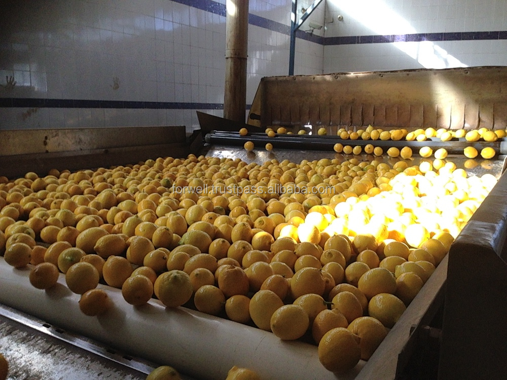 Egyptian fresh lemon with best price and best quality all size and 8-15 kg carton