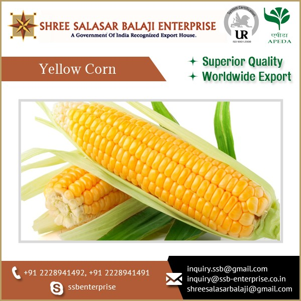 Best Quality Vitamins and Minerals Rich Yellow Corn for Multi-Purpose Use