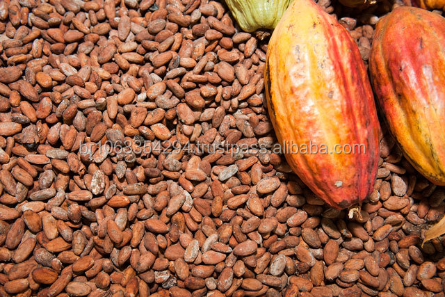 real Organic Cocoa / Cacao Beans