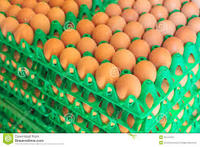 Fresh Table Chicken Eggs ( Brown and White)