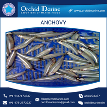 Most Selling Frozen Fish Anchovy in Bulk Packing