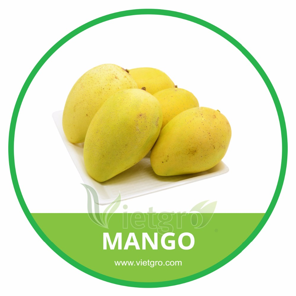 HIGH QUALITY FRESH MANGO /KEO MANGO/ VIETNAMESE FRESH FRUIT