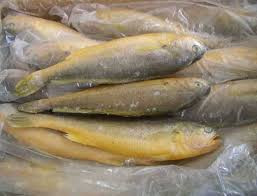 High Quality Frozen Yellow Croaker Fish