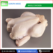 Processed Halal Frozen Chicken Quarter Legs/ Whole Chicken/Grade A Chicken