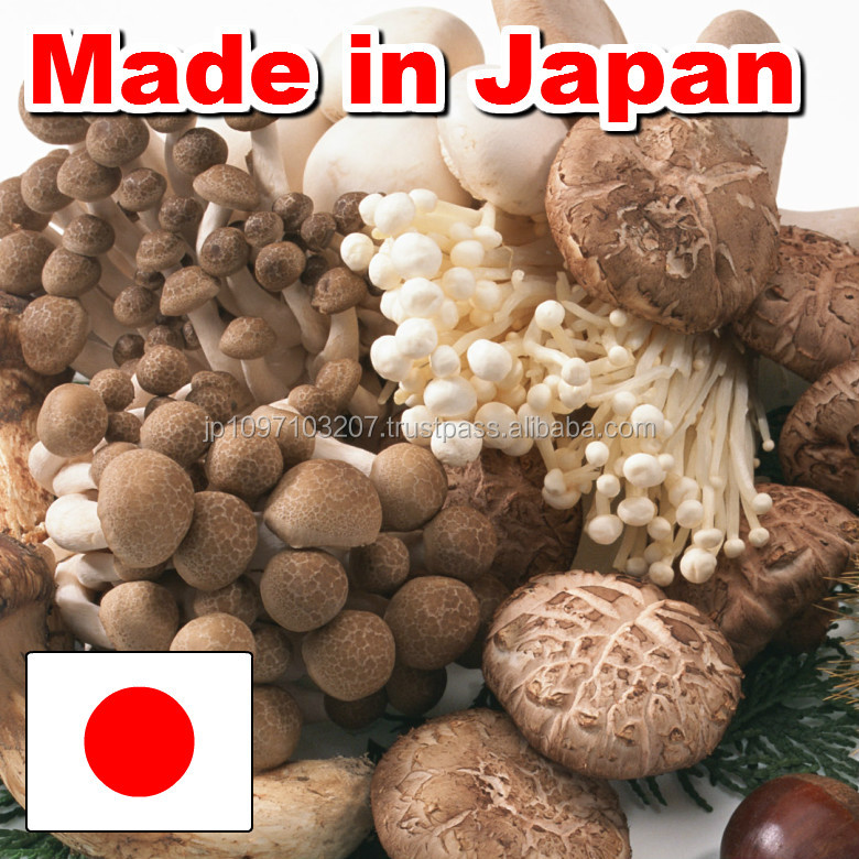Flavorful and Traditional dried mushrooms for import shiitake