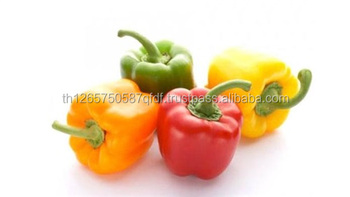 Royal color Capsicum for sale