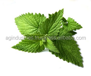 MENTHA SPICATA OIL CERTIFICATE OF ANALYSIS