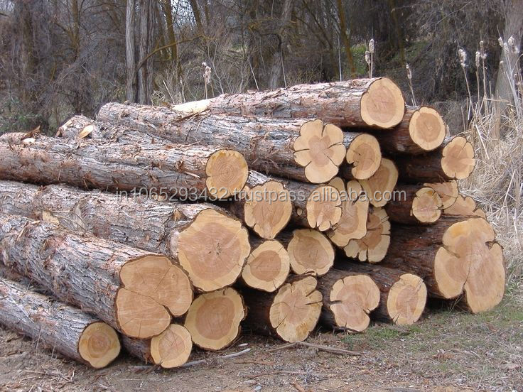 FACTORY PRICE TEAK WOODEN LOGS