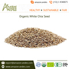Healthy and Pure White Chia Seed in Bulk (Organic and Conventional) at Reliable Cost