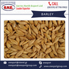 Animal Feed Barley for Sale