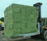 Super high quality Animal feed alfalfa / alfalfa hay for sale Cheap Price