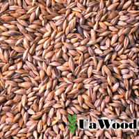 Animal feed barley from Ukraine