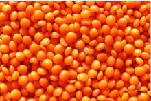 Red Split Lentils, Masoor Dal, Red Football Lentils, Red Whole Lentils, Canadian Red Lentils