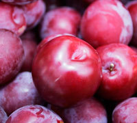 Best Quality Fresh plums from denmark