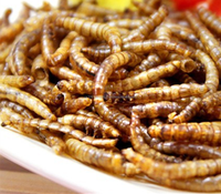 Dried mealworm wholesale bird food