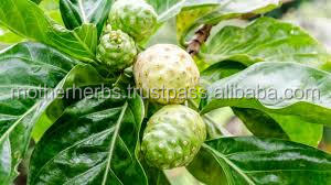 noni juice concentrate