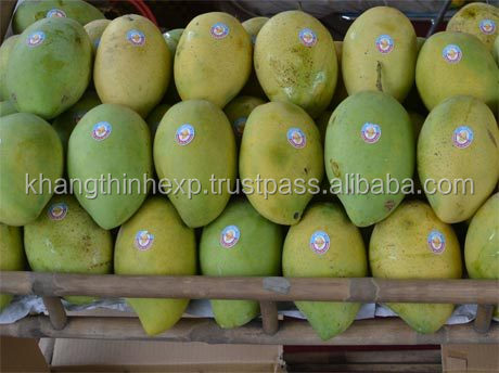 Fresh Mango cheap price from Vietnam
