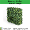 /product-detail/portable-laurel-hedge-75cm-for-artificial-bamboo-fence-50028382123.html