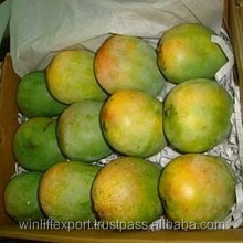 Fresh Alphonso Mangoes exporters to Canada
