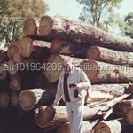 logs australian cypress native timber logs