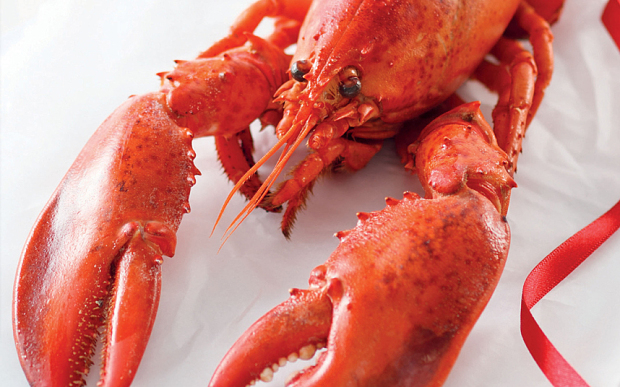 fresh sea lobster of all species on sales
